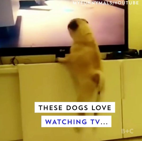 Dogs Watch TV, Too!