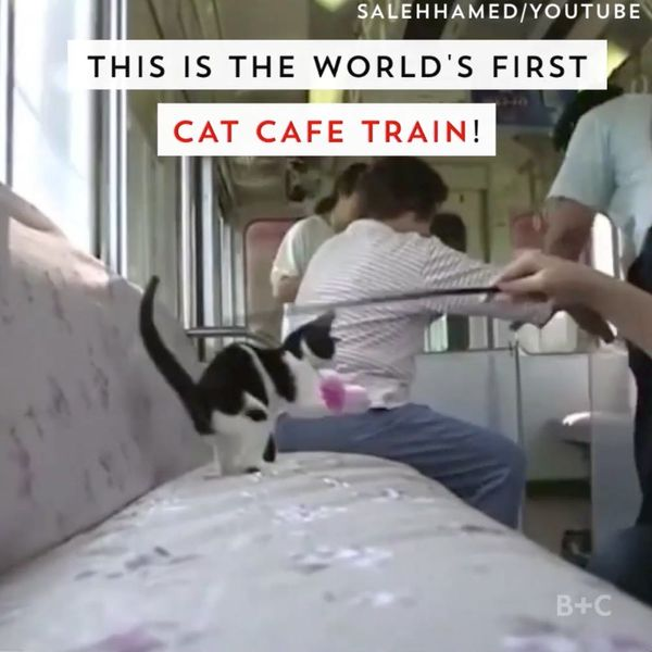 Travel Through Japan on a Train Filled With Kittens