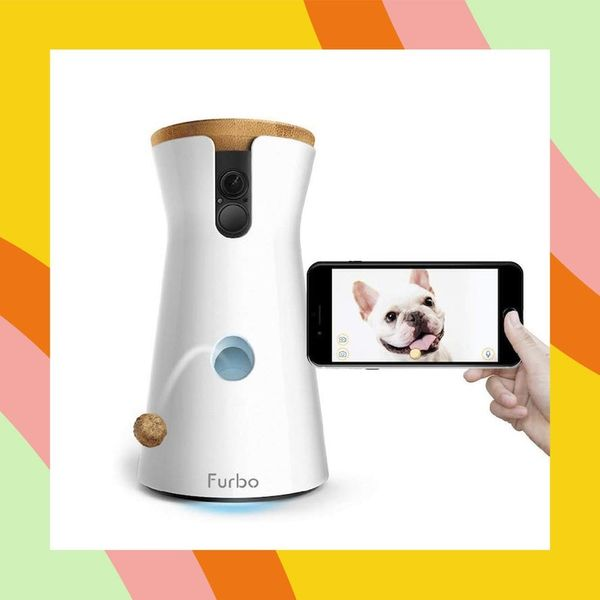 12 Innovative Products All Pet Owners Need