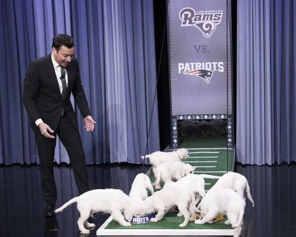 Watch Jimmy Fallon's Super Bowl Puppy Predictors Pick Tonight's Winner