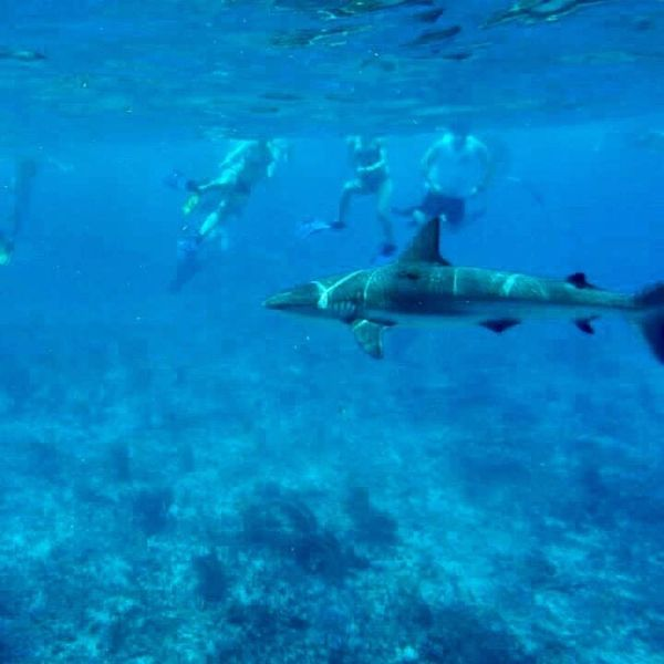 Shark Week Memories: What Swimming with Reef Sharks in the Bahamas Taught Me About Confidence