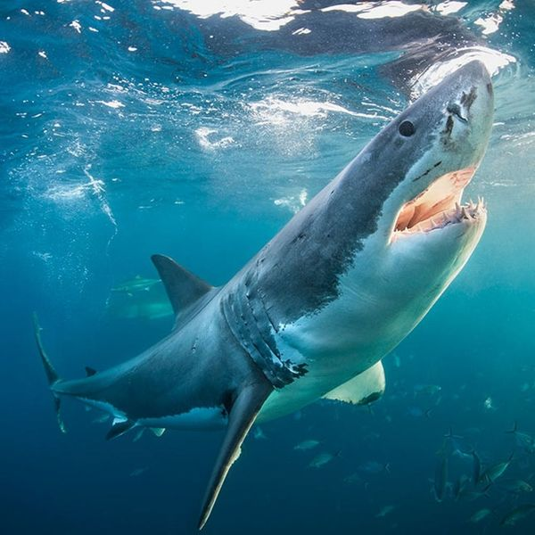 From South Africa to Bali, These Trips Let You Live Every Week Like It's Shark Week