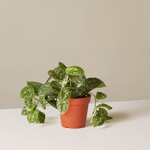 The One Trick That Will *Actually* Keep Those Indoor Plants Alive