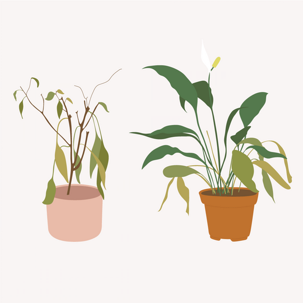 how to know if your plant is dying yellow leaf