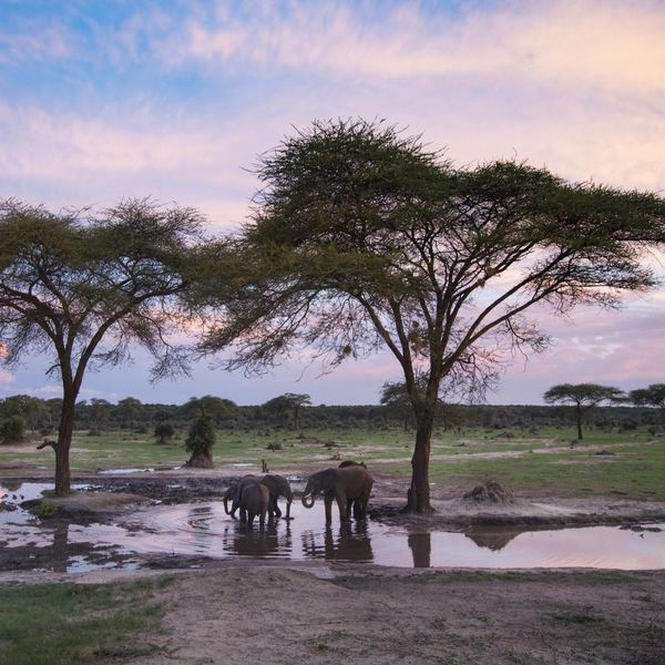 9 African Safaris That Are Worthy of a Royal Honeymoon
