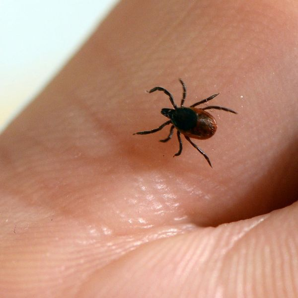 Lyme Disease Is Scary and on the Rise – How to Protect Yourself from Ticks