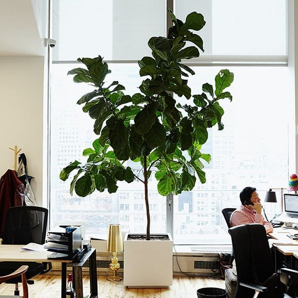 5 Indoor Plants With Air-Purifying Benefits