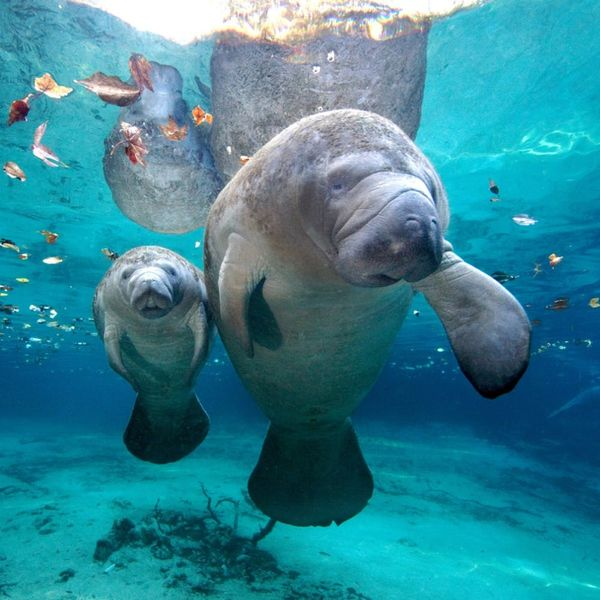 20 Bucket List Travel Destinations for Animal Lovers