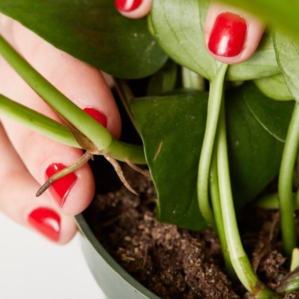 How to Propagate Plants Even If You're a Beginner