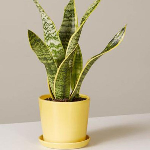 The Best Houseplants for Every Room in Your Home