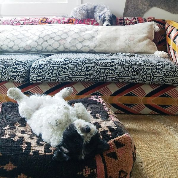 How Pet-Loving Home Decor Pros Really Keep Their Place Photo-Ready