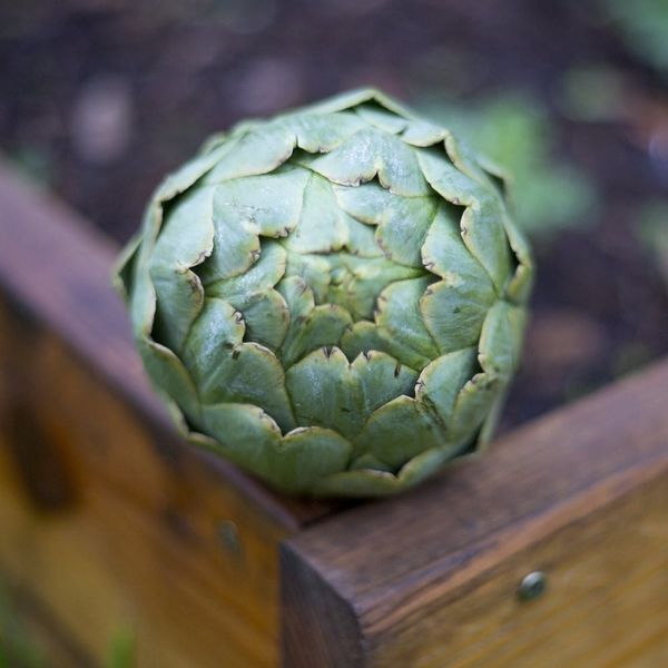 How to Steam an Artichoke (AKA the Best Excuse to Eat Garlic Butter)