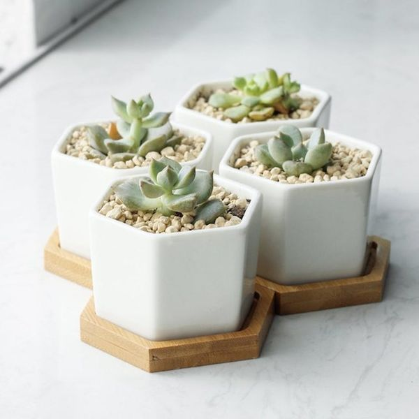 11 Life-Saving Products for People Who Are Not Blessed With a Green Thumb