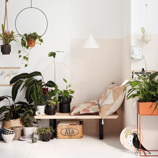 Lessons I Learned on My Path to Becoming a Plant Lady