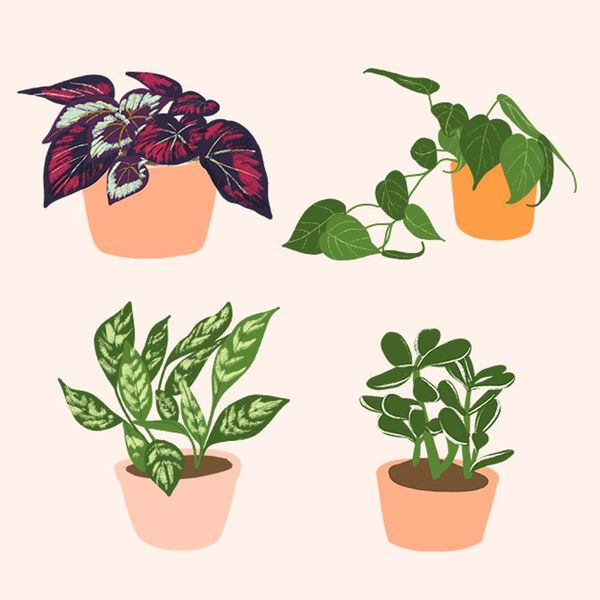 14 Houseplants That Are Dangerous for Your Pets and Kiddos