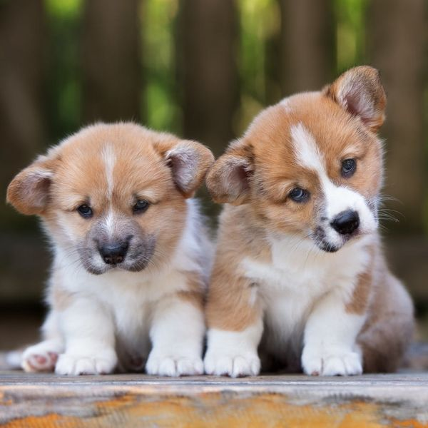 Here's How Looking at Puppy Pictures Can Help Your Relationship