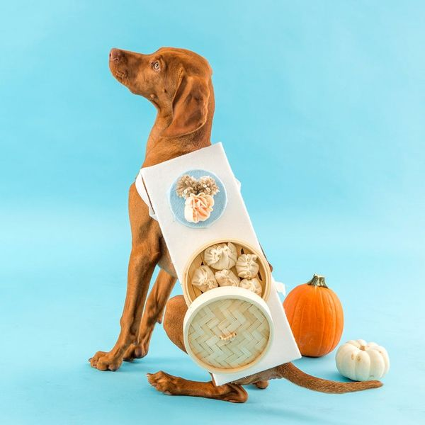 Dress Your Puppy in This Dim Sum Dog Costume for Halloween