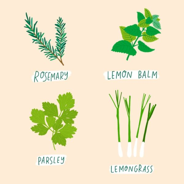 10 Tasty Herbs That Are Easy to Grow in Your Kitchen