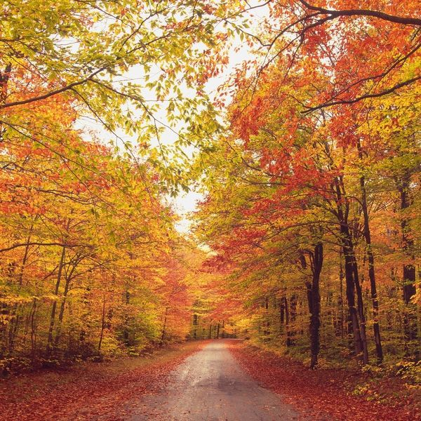 Here's When and Where to See Peak Fall Foliage