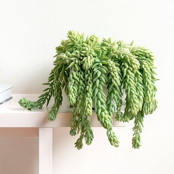 How Not to Kill These Trending Indoor Plants