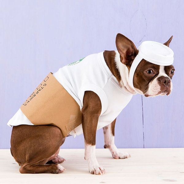 81 of the Best Dog Halloween Costume Ideas for Your Pooch