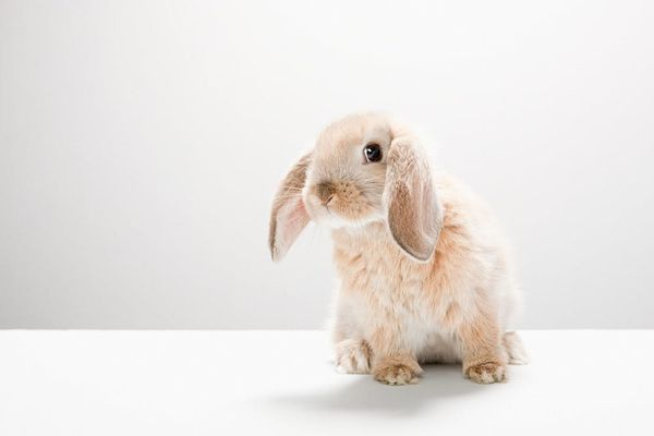 California Becomes the First State to Ban Cosmetics Testing on Animals