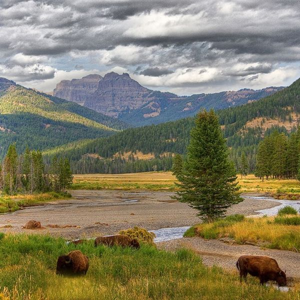 Born to Be Wild: The Ultimate Guide to Visiting Yellowstone Year-Round