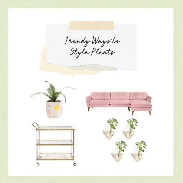 3 Trendy Ways to Style Plants in Your Home