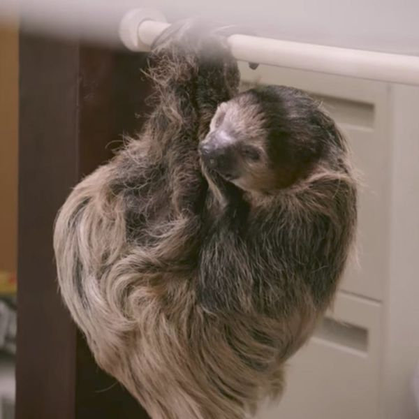 """Watch as Sloths Take Over a DMV Just Like in Disney's """"Zootopia"""""""