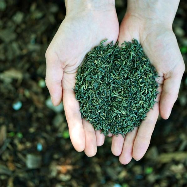 This Organic Tea Company Wants to Save Our Planet