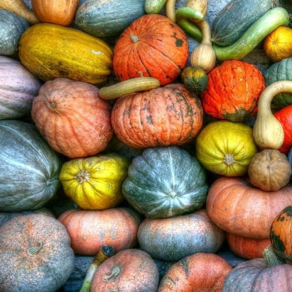 Your Seasonal Guide to Fall Produce