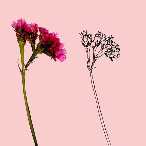 Learn How to Draw Any Wildflower in 5 Easy Steps