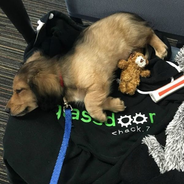 9 Dog-Friendly Companies That Will Make You Want to Come to Work