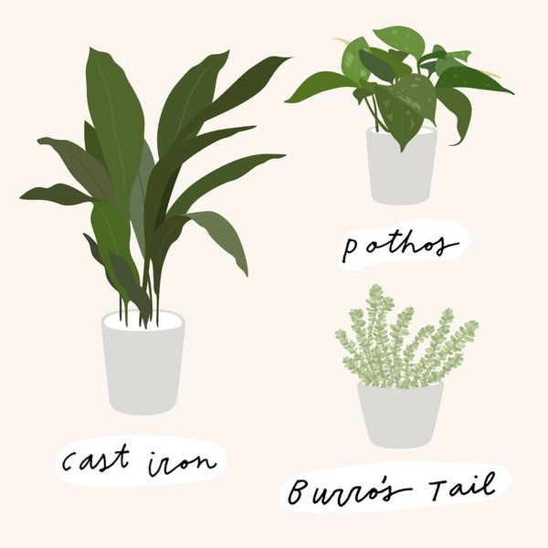 9 House Plants Even *You* Can't Kill