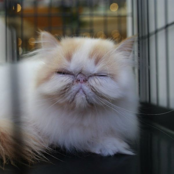 This Website Is Purrfect for Cat Lovers