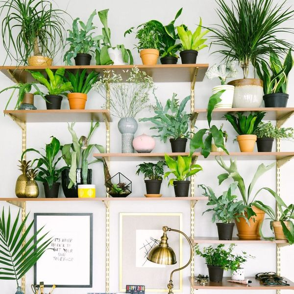 13 Plant #Shelfies That Take Indoor Gardens to New Heights