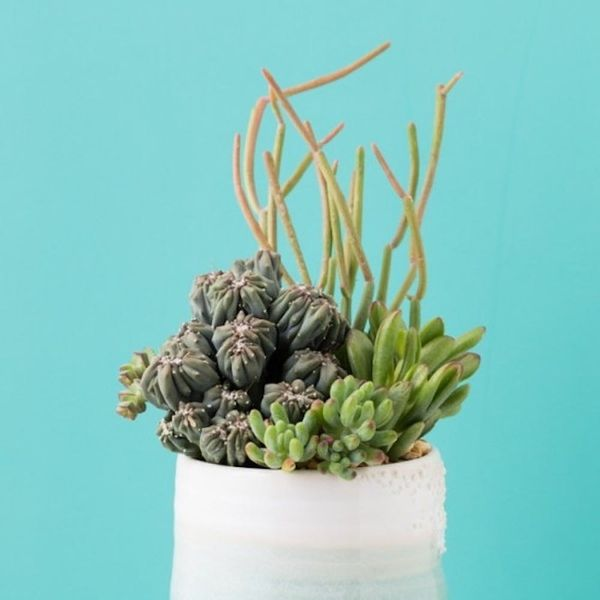 20 Weird House Plants You Didn't Know You Needed