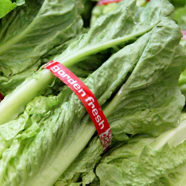 PSA: Romaine Lettuce Is Being Linked to E. Coli Outbreaks in 13 States