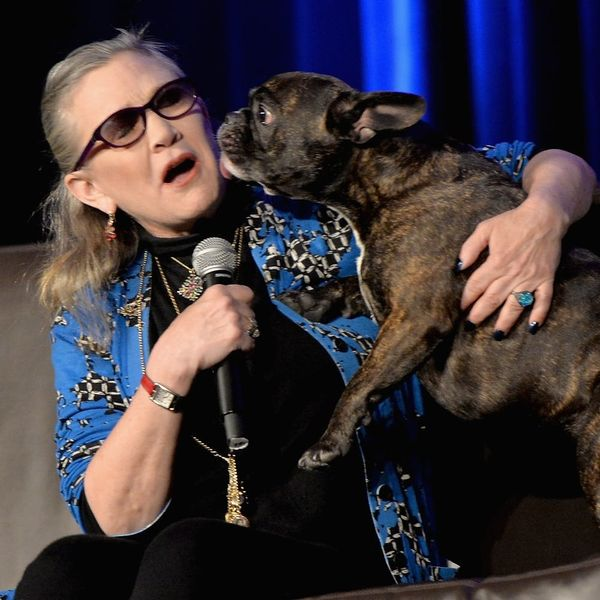 """Carrie Fisher's Dog Gary Is (Kind of) in """"Star Wars: The Last Jedi"""""""