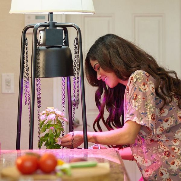 This Lamp Is the Key to Keeping Your Plants Alive and Thriving All Winter Long