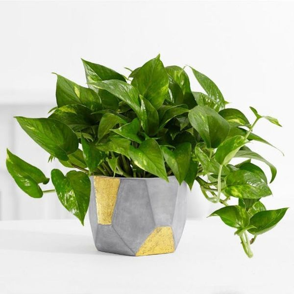 These NASA-Approved Plants Can Make Your Office Feel Happier and Healthier