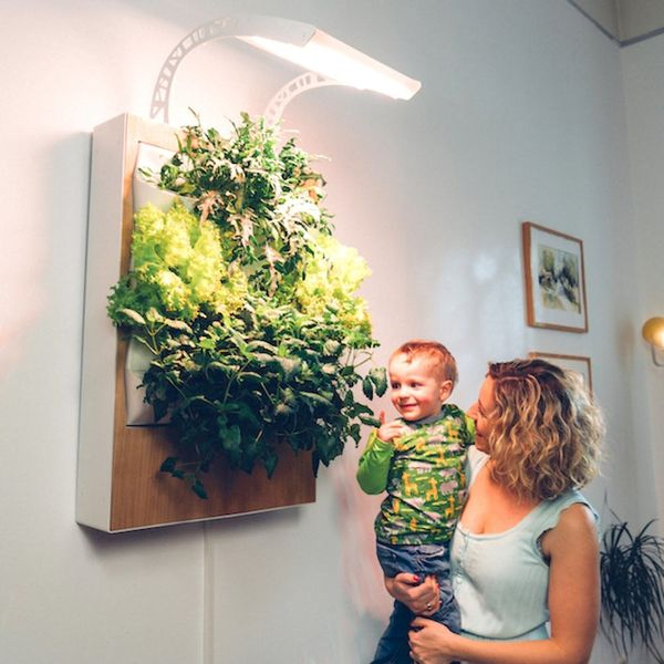 Get Your Grow on With This Easy Indoor Garden System