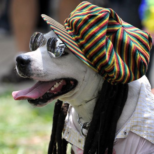 Science Says These Are the Music Genres Your Dog Digs Most