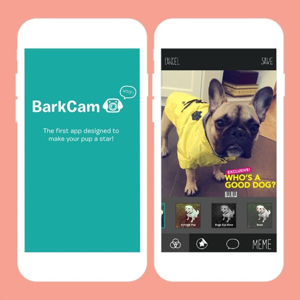 10 Dog Apps That Are Barking Genius