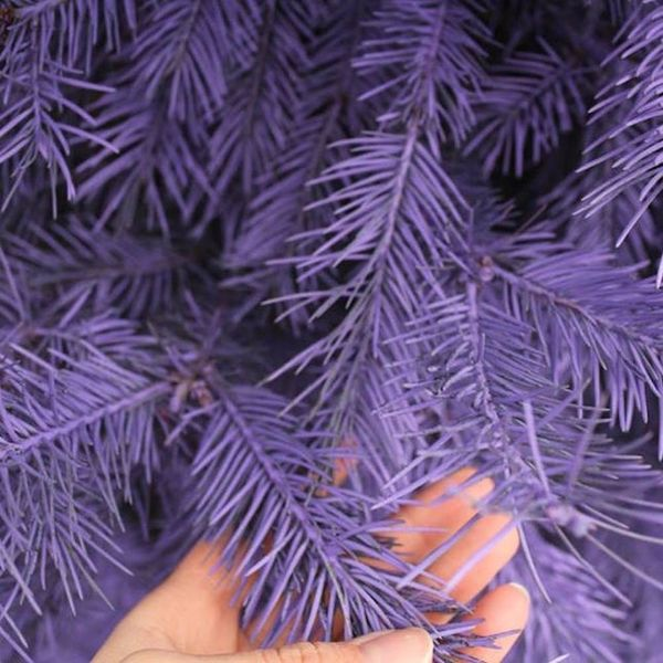 OMG: You Can Get REAL Purple + Pink Christmas Trees at This Tree Farm