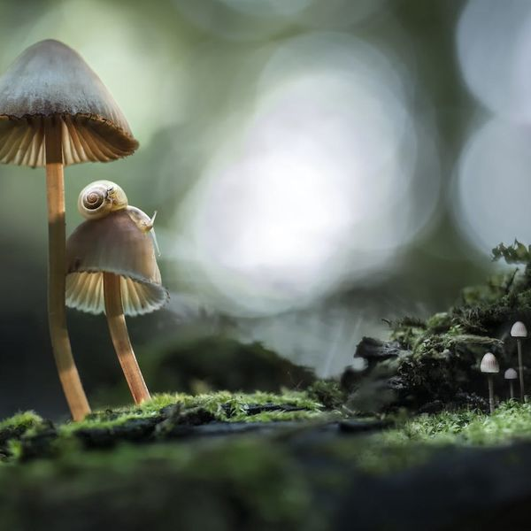 Magic Mushrooms Might Soon Be Prescribed As Antidepressants