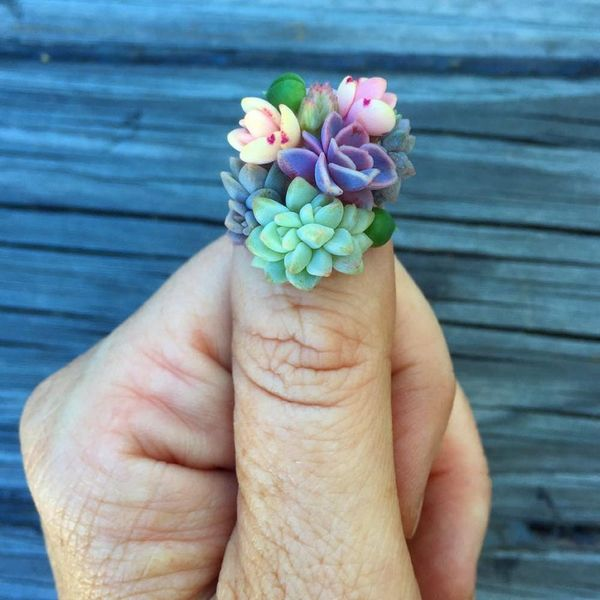 Yes, You're Reading This Right — Succulent Manis Are Now a Thing