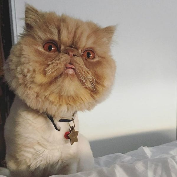 10 Catstagram Accounts That Will Make Your #NationalCatDay