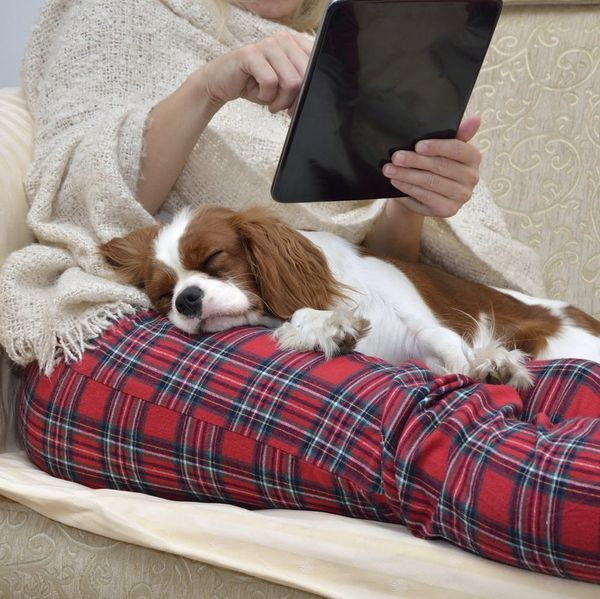 Dogs May Dream About Their Owners and the Internet Is Freaking Out About It