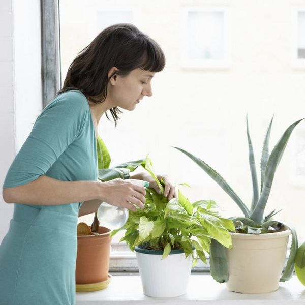 11 House Plants So Good for You They're Approved by NASA